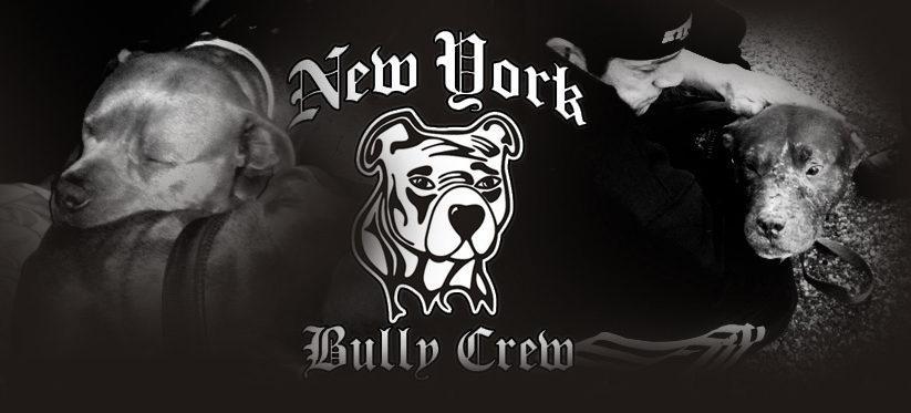 NY Bully Crew Profile Image